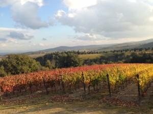 Lorenzo vineyards_4447